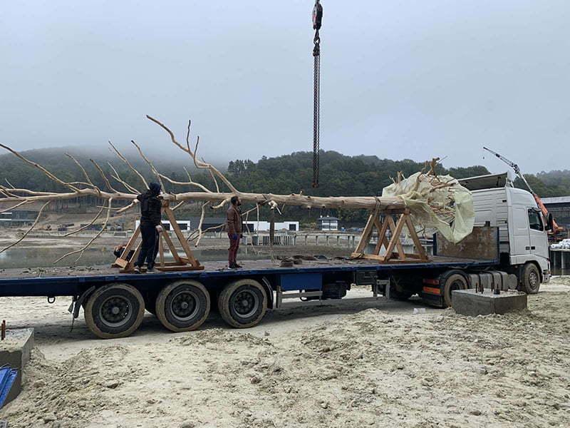 перевозка и установка дерева